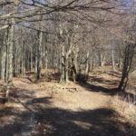 Pot in Kolovoz na Čemšeniško planino