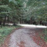 Cesta v Ključevico